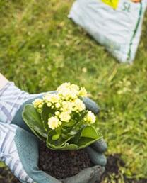 aria-fertilizers